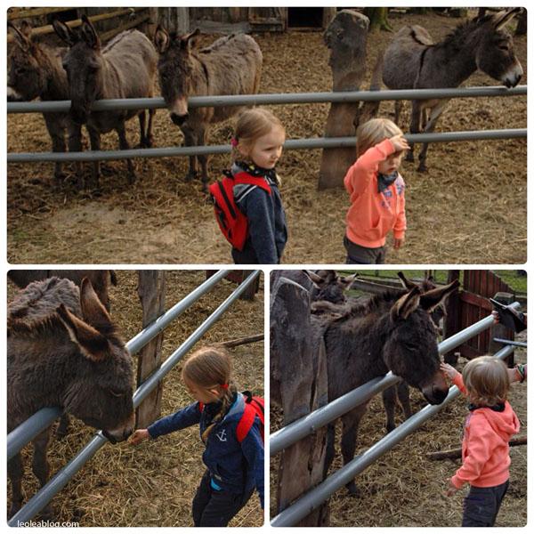 animals osioł osiołek zwierzyniec zwierzęta hodowla donkey dzieci kids polska poland eu europe minizoo