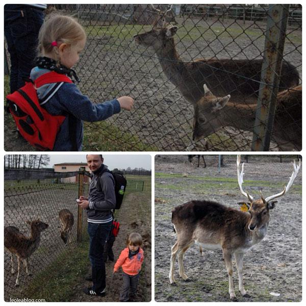 animals zwierzyniec zwierzęta hodowla dzieci kids polska poland eu europe minizoo