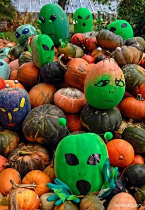 Halloween Wrocław Wrocławskifestiwaldyni festiwaldyni dynia pumpkin pumpkinpie Wroclove DolnyŚląsk