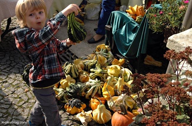 Halloween Wrocław Wrocławskifestiwaldyni festiwaldyni dynia pumpkin pumpkinpie Wroclove DolnyŚląsk Ogródbotaniczny