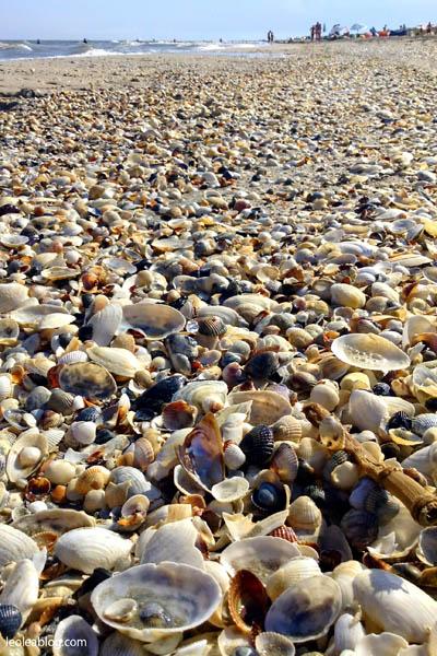 Rumunia Romania Eu Europe Easteurope Journey Travellers wyprawa wyjazd podróżnicy podrożnik vadu plażavadu morzeczarne blacksea plaza beach sand muszelkowaplaża muszle