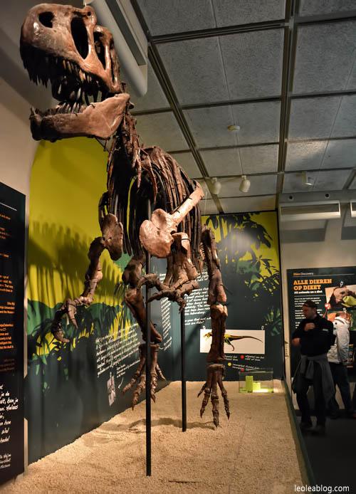 DenHaag Haga Holland Netherlands Holandia Museum Muzeum Dinozaury Dino Children Dzieci Eu Europe Dziecko Leo Lea Dutchmuseum Bones Kosci