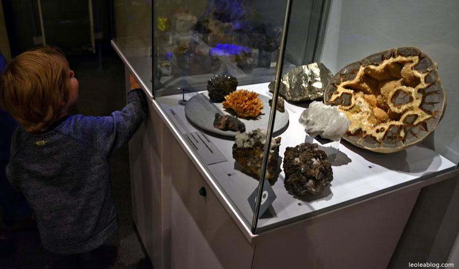 DenHaag Haga Holland Netherlands Holandia Museum Muzeum Dinozaury Dino Children Dzieci Eu Europe Dziecko Leo Lea Dutchmuseum