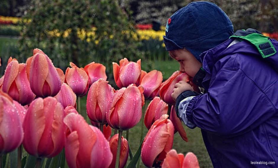 Keukenhof Holland Netherlads ogrod Dutch Flowers Kwiat Holandia Oranje Prideofholland garden dziecko kids junior children child Eu Europetulipany tulipans