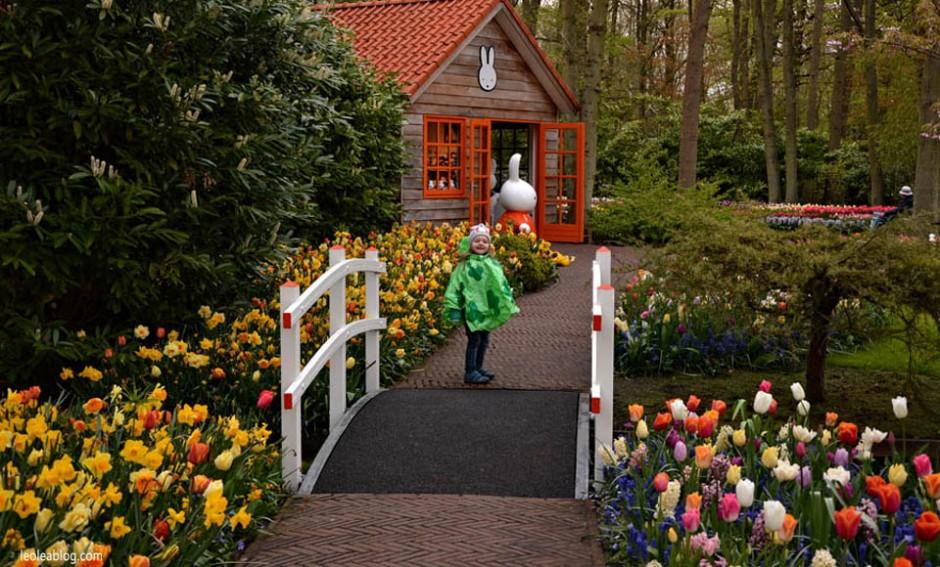Keukenhof Holland Netherlads ogrod Dutch Flowers Kwiat Holandia Oranje Prideofholland garden tulipany tulipans chodaki miffy nijntje