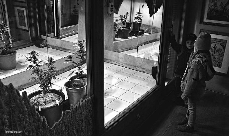 Amsterdam Holland Holandia Marijuana Marihuana Cannabis Hash Muzeum Museum Muzeummarihuany