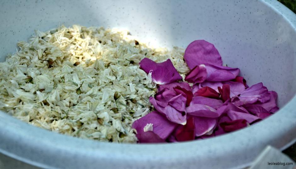 akacja konfitura dżem przepis kuchnia dzika róża