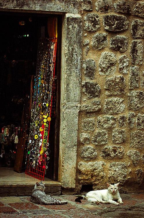 Kotor Montenegro Czarnogóra Balcans Bałkany Eu Europe Zatokakotorska Holiday Journey Travel Traveller Traveler Adventure Travelaroundtheworld cat lazycat chillout relaks zwierzęta animals