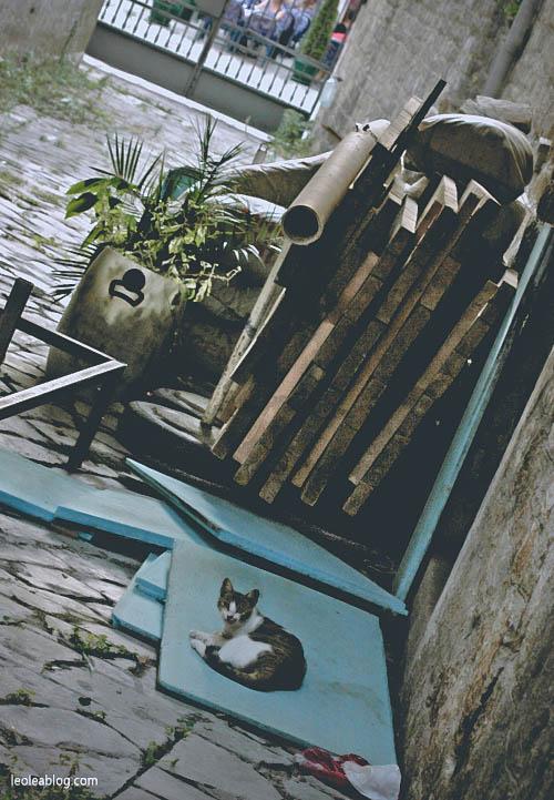 Kotor Montenegro Czarnogóra Balcans Bałkany Eu Europe Zatokakotorska Holiday Journey Travel Traveller Traveler Adventure Travelaroundtheworld cat chillout zwierzęta odpoczynekanimals
