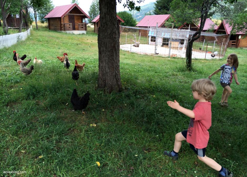 etnoselo etnoselomontenegro montenegro eu europe bałkany balcans journey holiday travel traveller traveler childrenplayground playground wioska czarnogóra kury kurczak chicken children podróżezdziećmi podróż podróże sonanddaughter