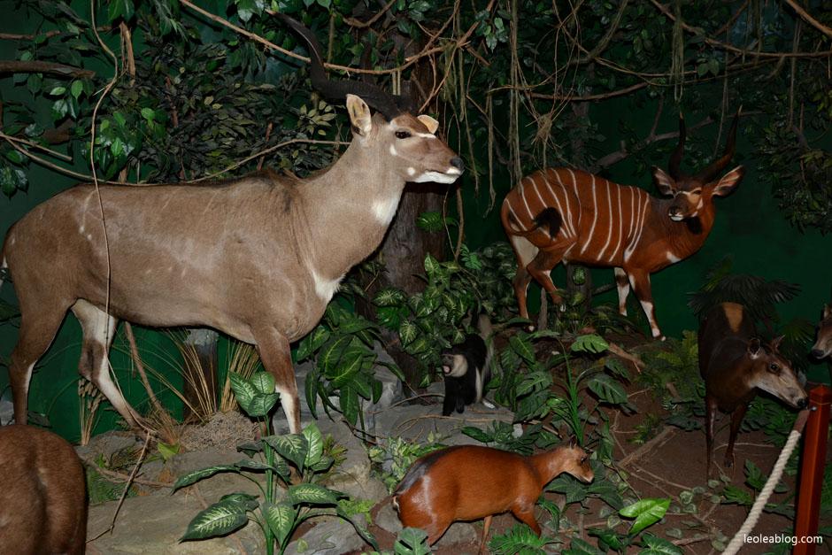 muzeum łowiectwo keszhtely hungary węgry podróże poroże myśliwstwo museum Kesthell zwierzęta animals huntingmuseum hunters